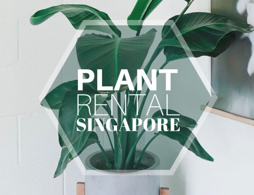 Best Option for Corporate Plant Rental in Singapore