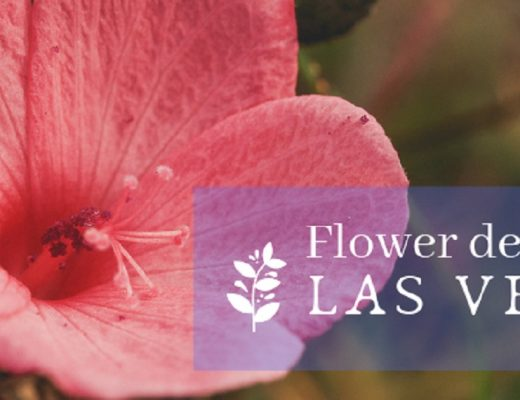 The 15 Best Options for Flower Delivery in Las Vegas