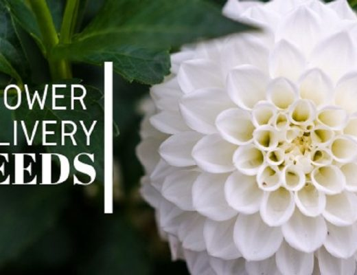The 10 Best Options for Flower Delivery in Leeds