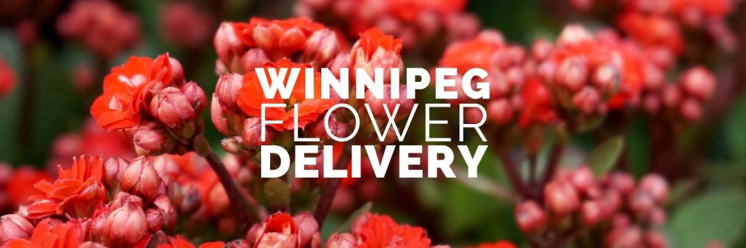 Best Flower Delivery Winnipeg