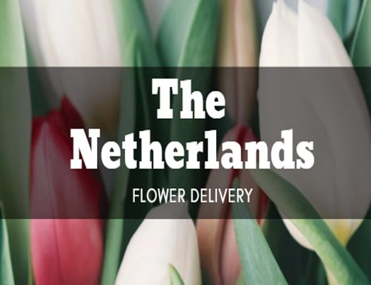 The 7 Best Options for Flower Delivery in the Netherlands