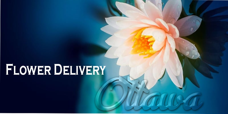 The 12 Best Flower Delivery Options in Ottawa