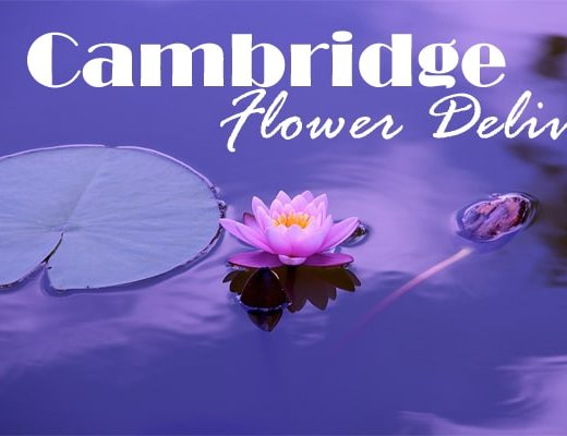 7 Best Flower Delivery in Cambridge, MA