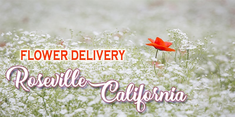 The 9 Best Options for Flower Delivery in Roseville, California