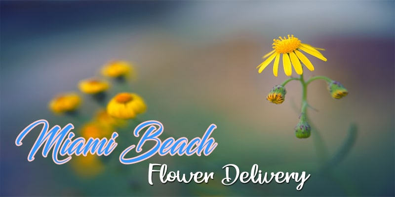 6 Best Options for Flower Delivery in Miami Beach