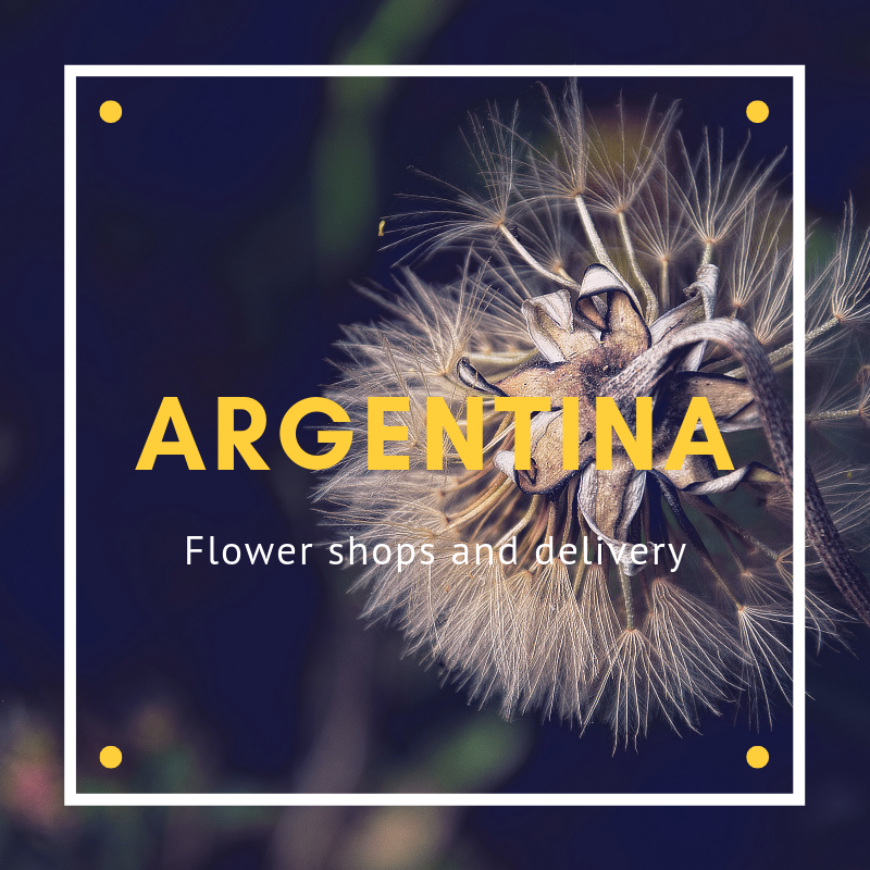 The 12 Best Options for Flowers in Argentina