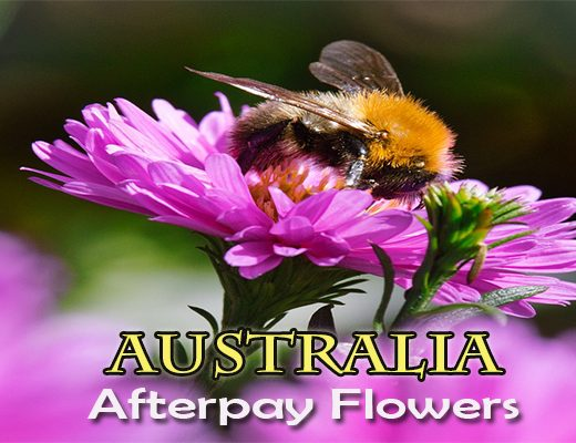 The 10 Best Options to Use Afterpay for Flowers in Australia