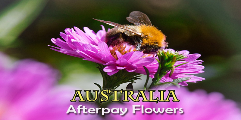 The 6 Best Options to Use Afterpay for Flowers in Australia