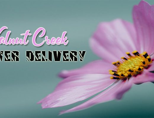 The 7 Best Options for Flower Delivery in Walnut Creek