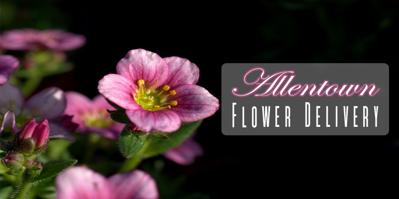 The 7 Best Options for Flower Delivery in Allentown, Pennsylvania