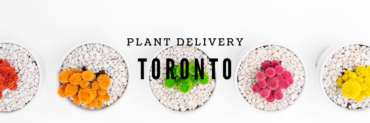The 7 Best Options for Plant Delivery in Toronto