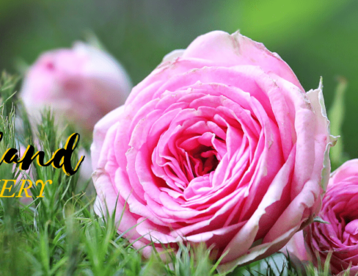 The 6 Best Options for Flower Delivery in West Auckland